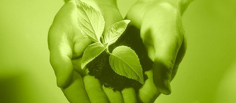 ILU - Institut für Lebensmittel- und Umweltforschung e.V.